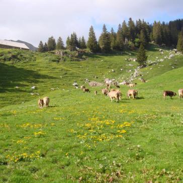 Alp Hintermatt (157)