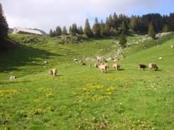Alpauffahrt 2015
