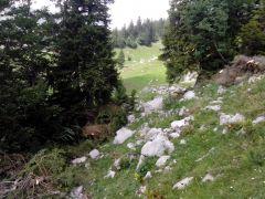 Holzen 2015 (12)