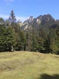 Streui Sulzbach 2015 (18)