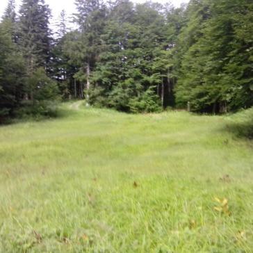Streui Sulzbach 2015 (2)
