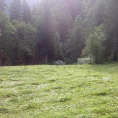Streui Sulzbach 2015 (4)