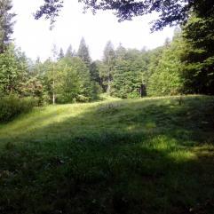 Streui Sulzbach 2015 (5)