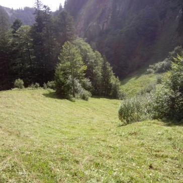 Streui Sulzbach 2015 (6)