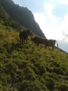 Die letzten Tage auf der Alp 2015 (11)