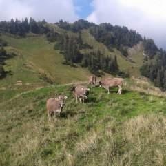 Die letzten Tage auf der Alp 2015 (12)