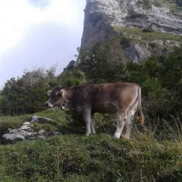Die letzten Tage auf der Alp 2015 (13)