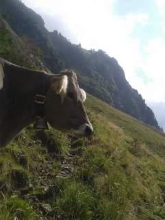 Die letzten Tage auf der Alp 2015 (14)