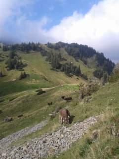 Die letzten Tage auf der Alp 2015 (15)