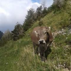 Die letzten Tage auf der Alp 2015 (16)