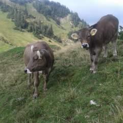 Die letzten Tage auf der Alp 2015 (21)