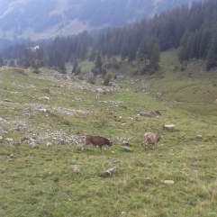 Die letzten Tage auf der Alp 2015 (22)