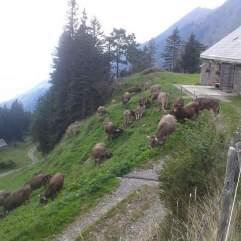 Die letzten Tage auf der Alp 2015 (24)