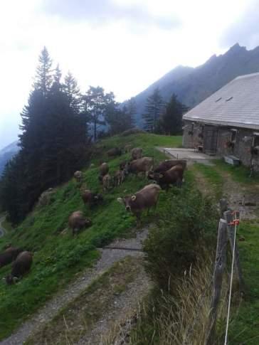 Die letzten Tage auf der Alp 2015 (25)