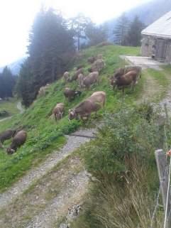 Die letzten Tage auf der Alp 2015 (26)