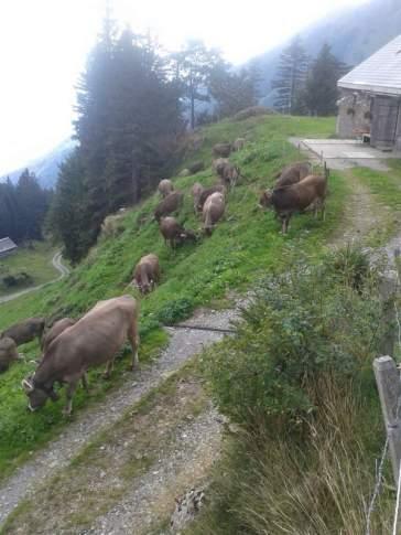 Die letzten Tage auf der Alp 2015 (27)