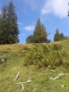 Die letzten Tage auf der Alp 2015 (3)