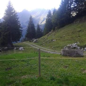 Die letzten Tage auf der Alp 2015 (31)