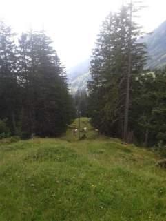 Die letzten Tage auf der Alp 2015 (34)