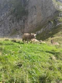 Die letzten Tage auf der Alp 2015 (6)