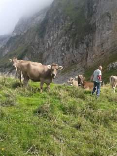 Die letzten Tage auf der Alp 2015 (7)
