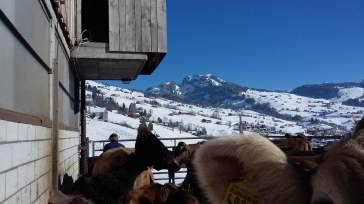 04-Laufhof Winter 2016 (6)