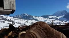 05-Laufhof Winter 2016 (8)