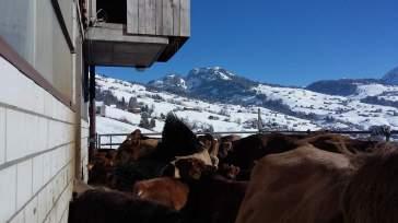 08-Laufhof Winter 2016 (11)