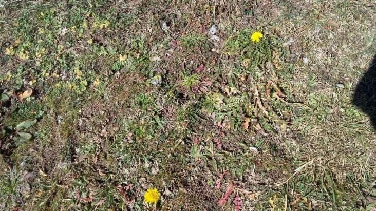 2-Frühlin im Winter 2016 (3)