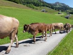 Alpauffahrt_2016_014