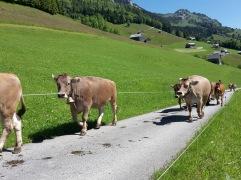Alpauffahrt_2016_017