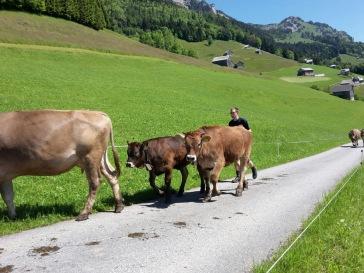 Alpauffahrt_2016_021