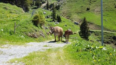 Alpauffahrt_2016_032