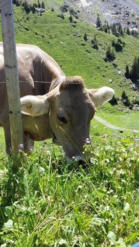 Alpauffahrt_2016_035