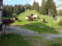 Alpauffahrt_2016_037