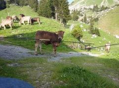 Alpauffahrt_2016_038