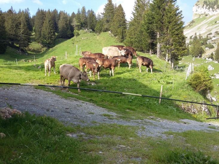 Alpauffahrt_2016_039