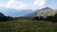 alpabfahrt-2016-10
