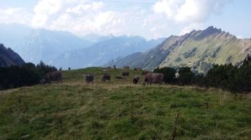alpabfahrt-2016-9