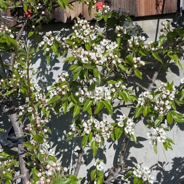 Frühling Blumen (1)