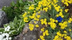 Frühling Blumen (10)