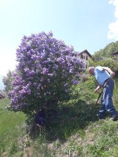 Frühling Blumen (11)