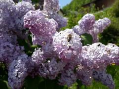 Frühling Blumen (12)