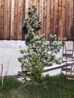 Frühling Blumen (2)
