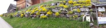 Frühling Blumen (3)