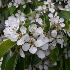 Frühling Blumen (5)