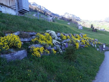 Frühling Blumen (6)