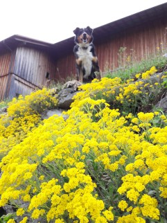 Frühling Blumen (7)