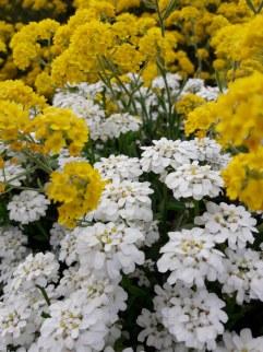 Frühling Blumen (8)