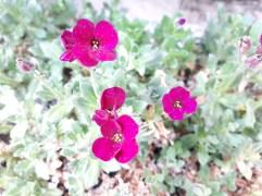Frühling Blumen (9)